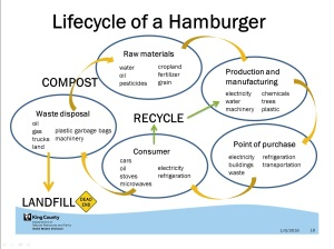 Hamburger lifecycle