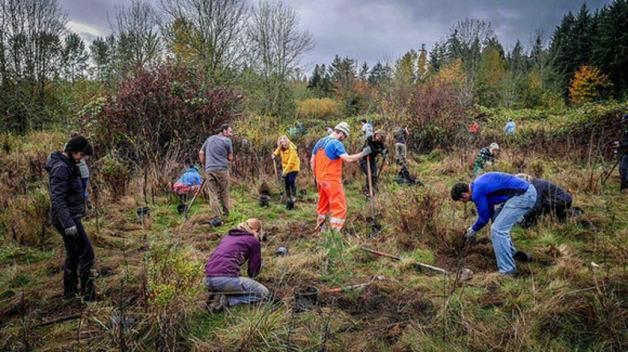 outdoor-volunteer-planting-event