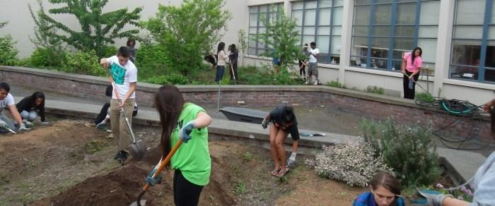 Starting the garden