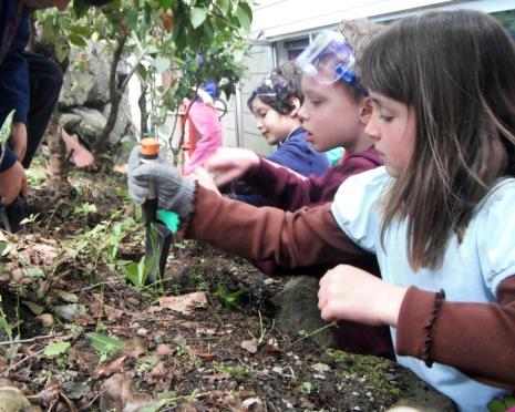 TheEvergreenSchool garden