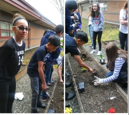 RainierMS-ASD-Students-GardenRevitalization