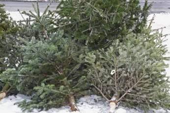 recycle-holidays-Trees-large